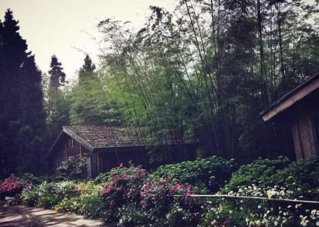 涪陵民宿-林中四舍民宿:重庆涪陵雨台山风景区 林中四